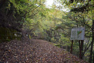 写真7: R152長野県側