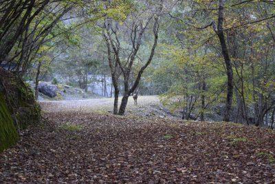 写真8: 鹿のお出まし